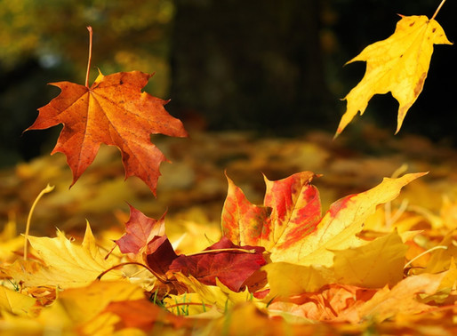 Autumn care through Ayurveda