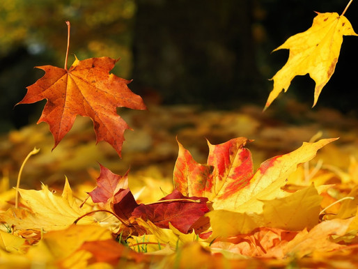 Autumn care through Ayurveda
