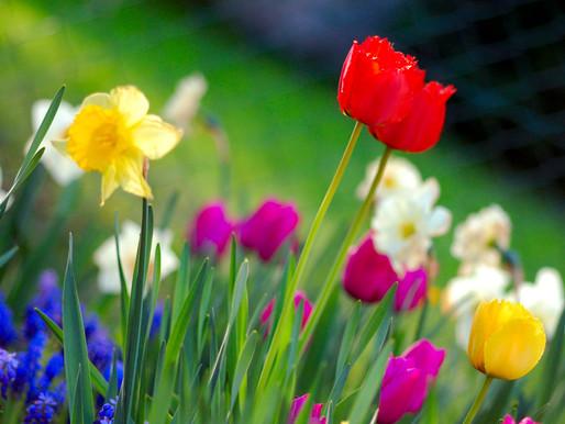 Spring: Kapha season