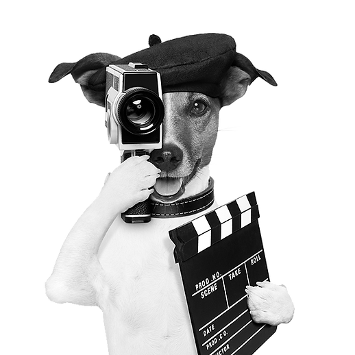 dogmedia-grayscale-600.png