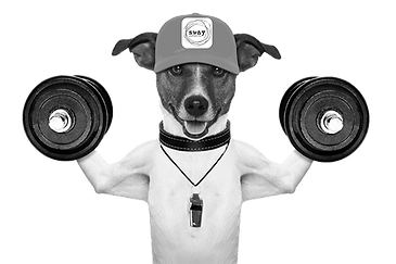 SwayDog-Weights-grayscale-600.png
