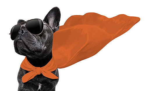 Dog-Cape-grayscale-orangecape-600.jpg