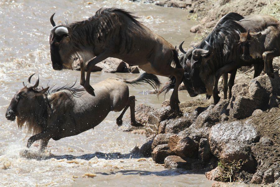Wildebeest-migration-3.jpg