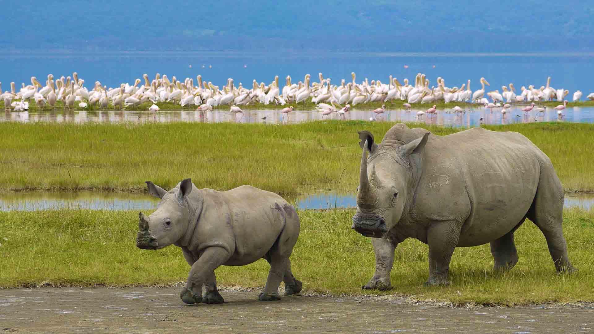 nws-st-tanzania-rhino-ngorongoro-crater.
