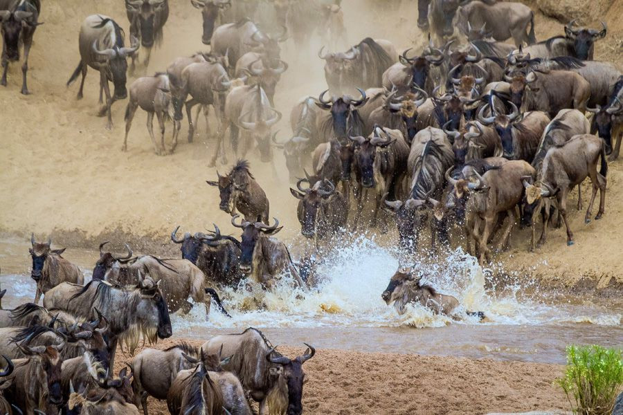 Wildebeest-migration-1.jpg