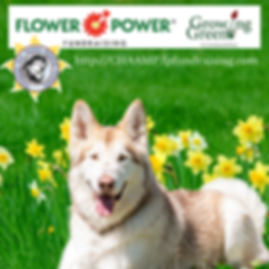 FlowerPwr2 (1).png