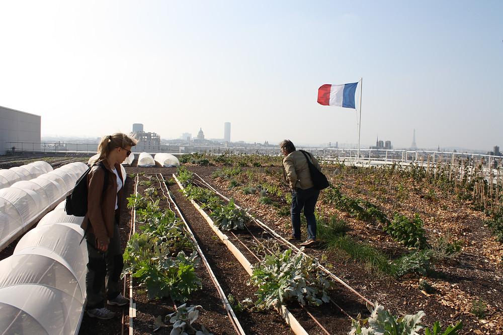 Les cultures de Topager à l'Opéra Bastille avec vue sur Paris