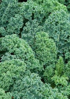 Kale-Starbor[1].jpg