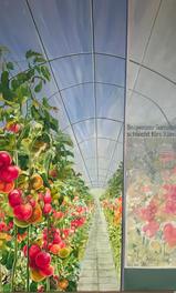 Tomaten Horsol / 2015
