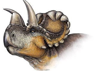 How many of you have heard Wendiceratops?