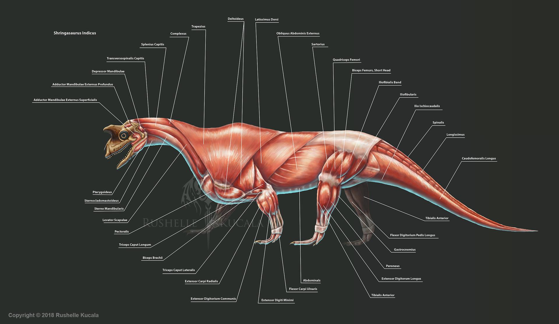 rushelle-kucala-shringasaurusindicusmusc