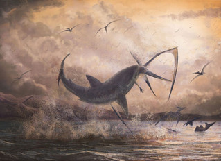 Sharks in the sky? It's not a bad movie; it's natural history