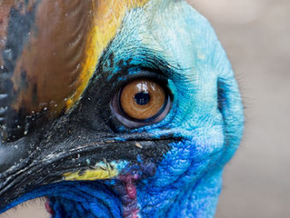 Are Birds Dinosaurs?