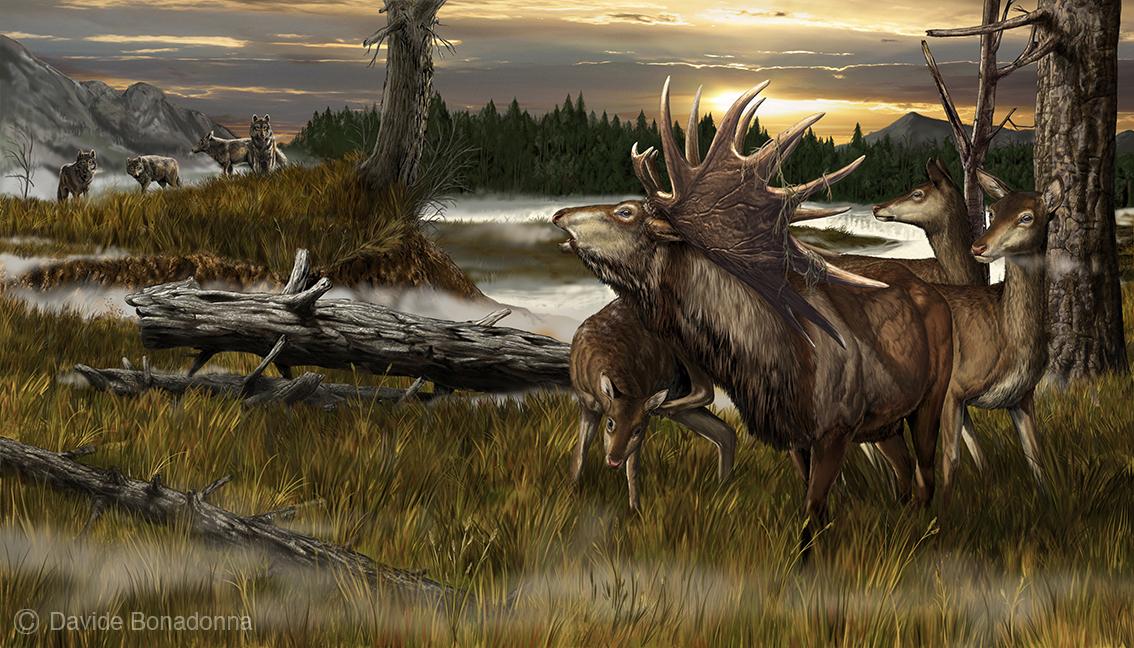 15-Megaloceros