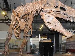 Meet Scotty, The Largest T.Rex ever discovered.