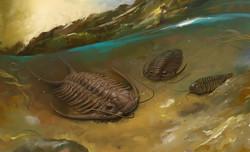 Eldar-Zakirov-2016--Seaside-Oceanarium--