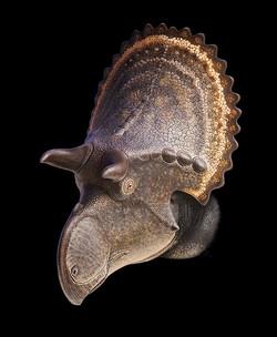 nasutoceratopsin_cmn_8804_by_olorotitan-