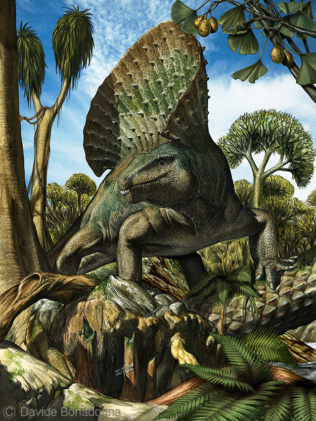 10-Edaphosaurus