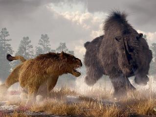 Massive Lion!