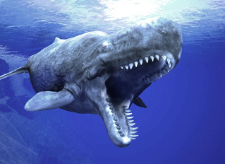 A Whale With T-Rex Size Teeth!!!
