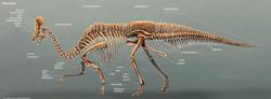 rushelle-kucala-olorotitanskeletonlabels