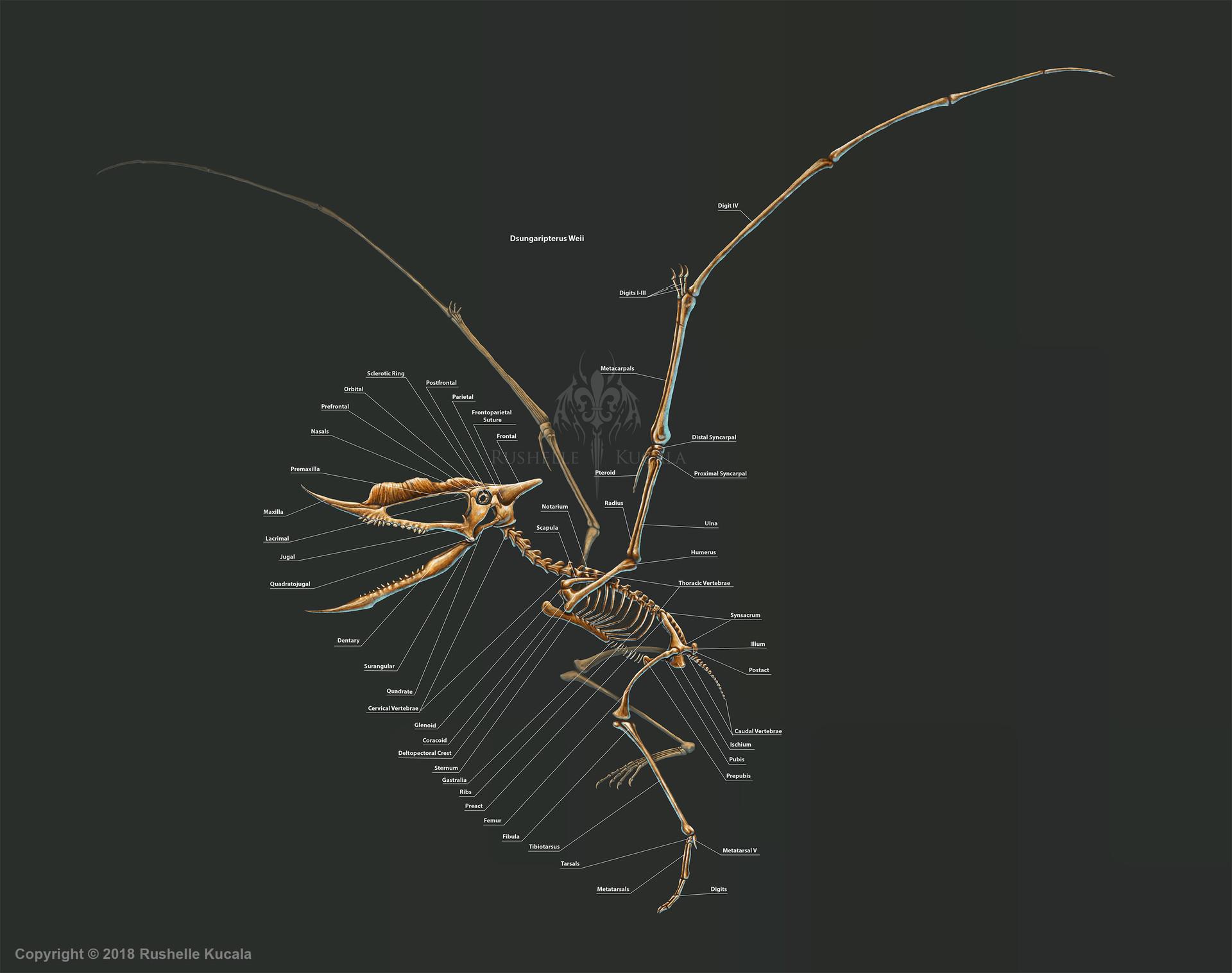rushelle-kucala-dsungaripterusweiiskelet