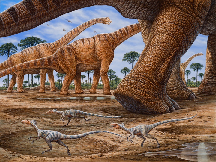 Compsognathus in brachiosaur herd