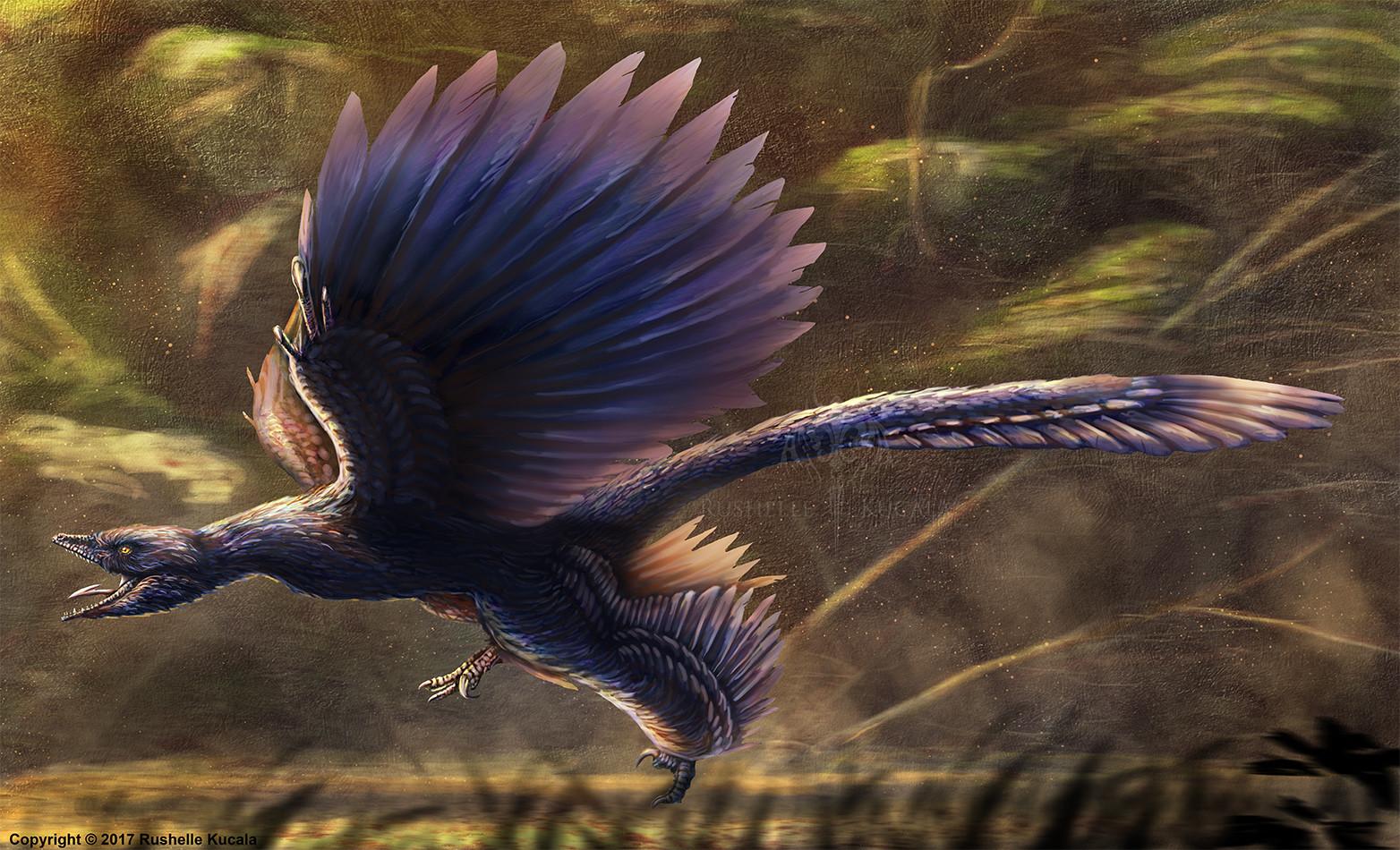 rushelle-kucala-microraptorguirestored