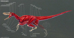 rushelle-kucala-dakotaraptormuscleslabel