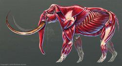 rushelle-kucala-mammuthusprimigeniusmusc