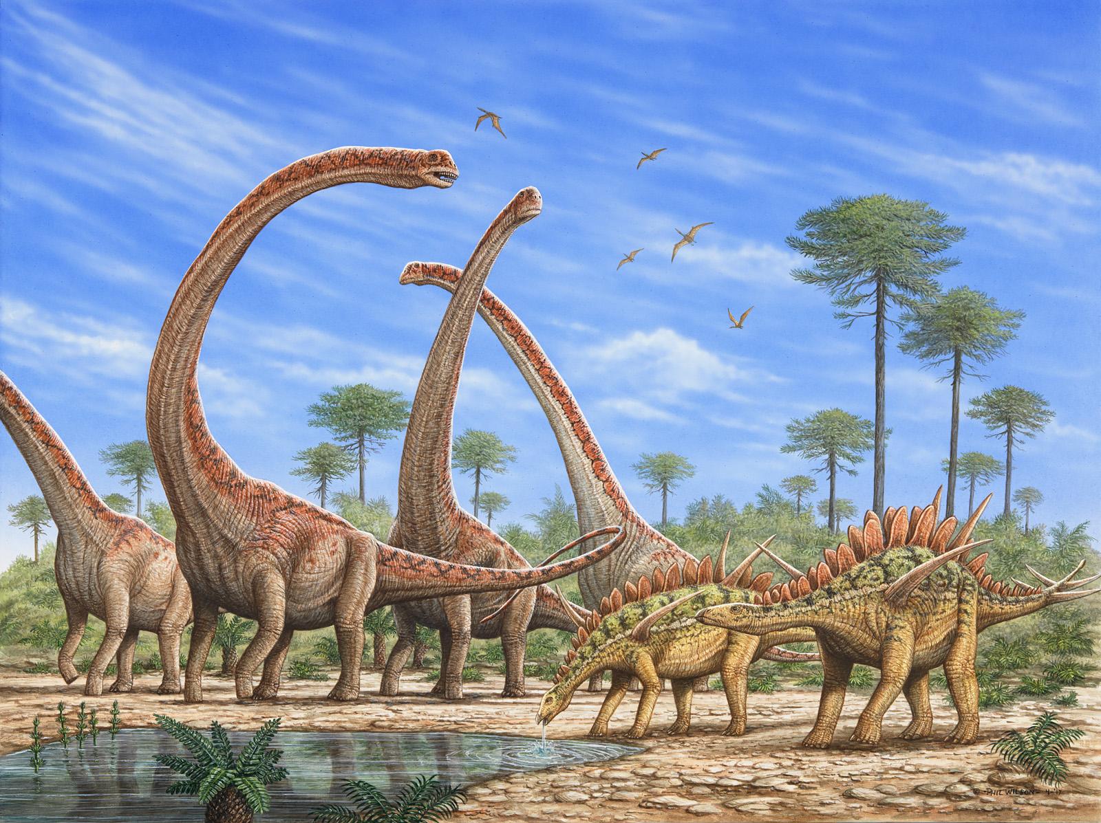 Mamenchisaurus & Huayangosaurus