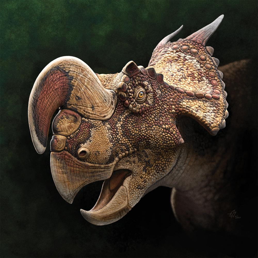 Einiosaurus_l2