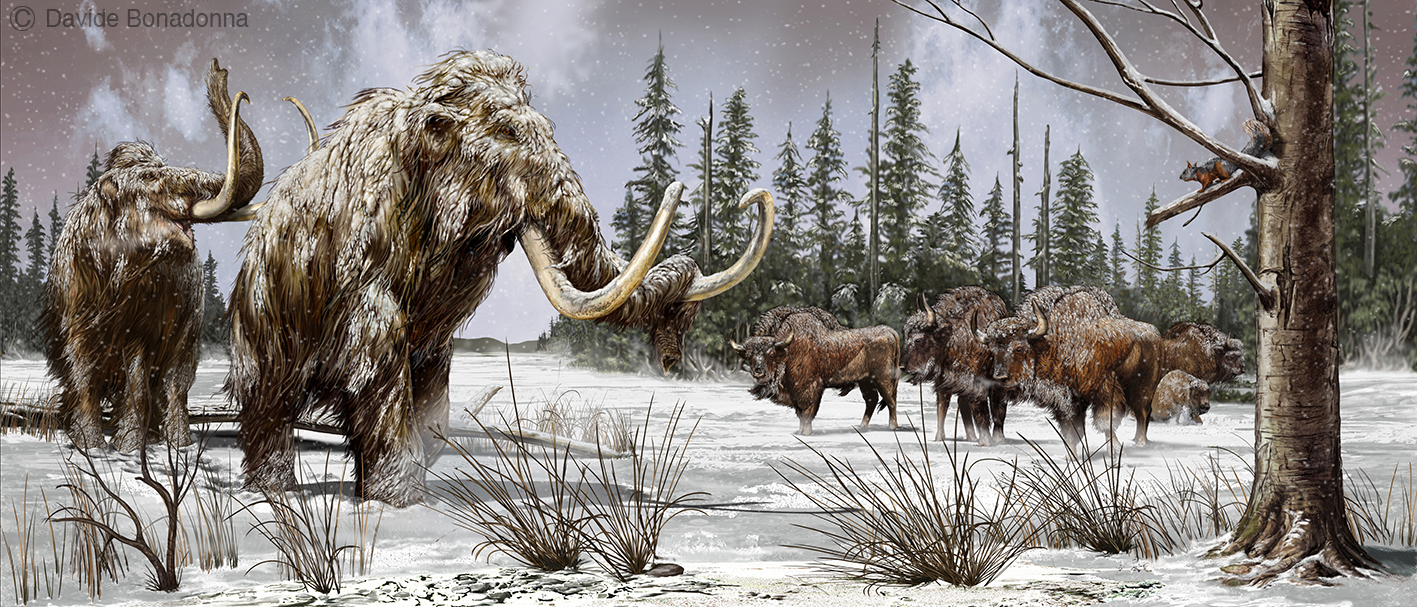 13-Mammuthus-primigenius-and-Bison-prisc
