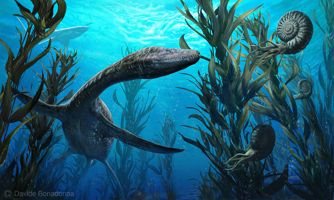 23-Plesiosaurus-and-Ammonite