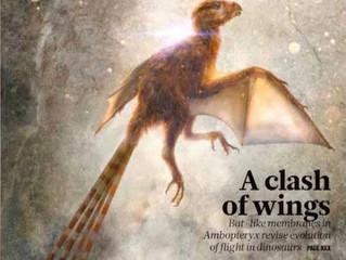 Meet Ambopteryx longibrachium - Half Bat Half Bird