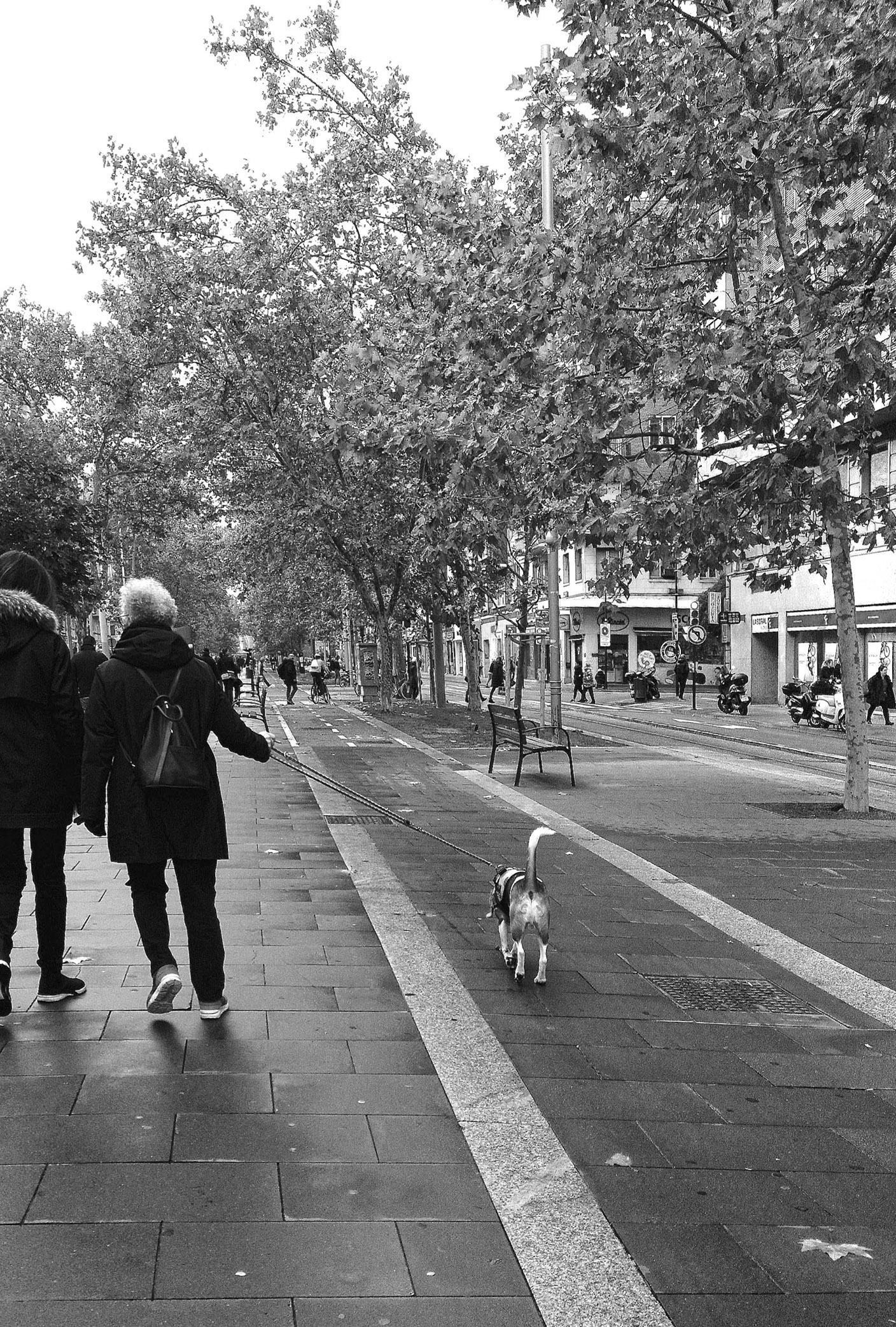 Street Paseo Zaragoza