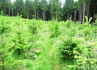 pflanzung.jpg