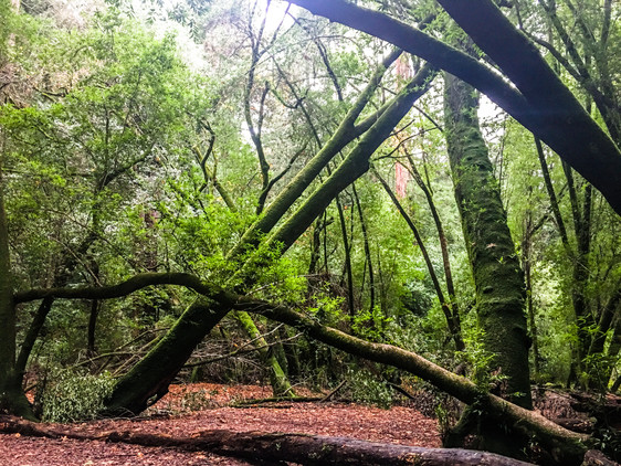 Reduce Stress In the Forest