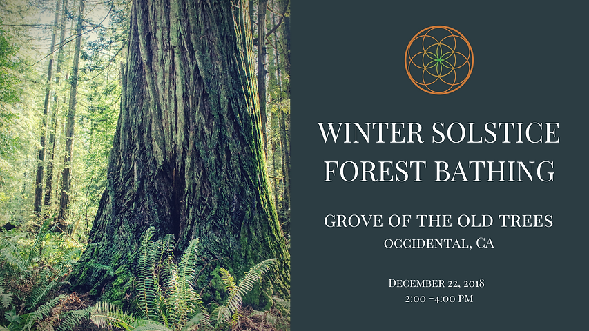 Winter Solstice Forest Bathing SM.png