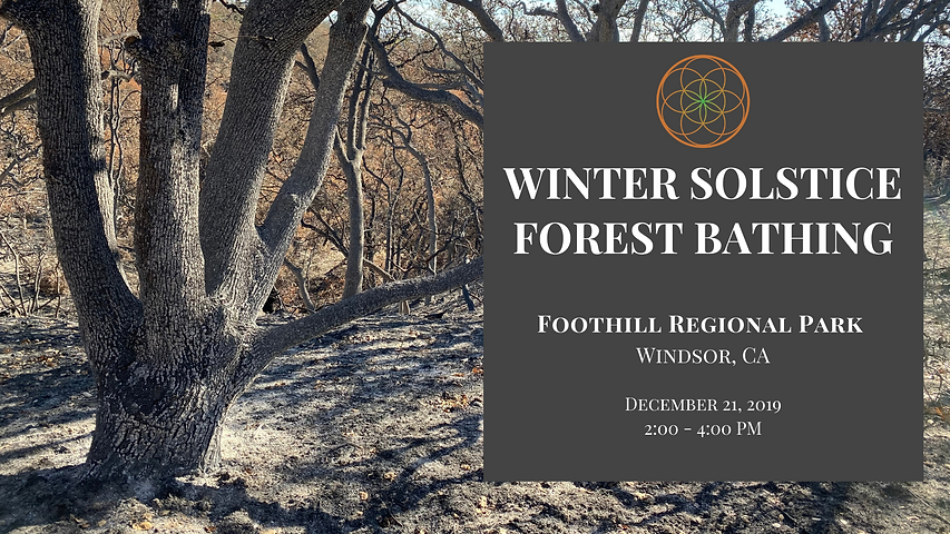 Winter Solstice forest bathing Event Cov