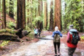 Forest Bathing 1.jpg