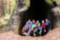 IHL Redwoods.jpg
