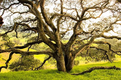Helen Putnam Tree.jpg