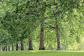 trees, baum, allee, nature, vitality