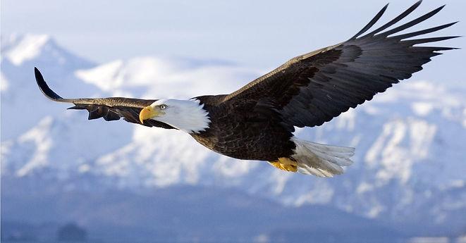 aguia-voando-wallpaper.jpg