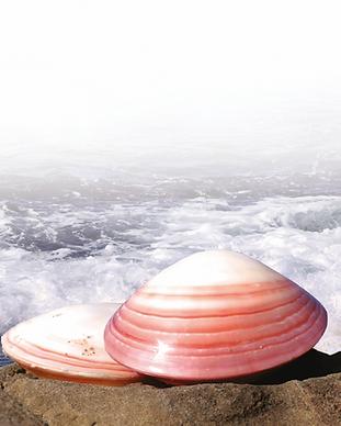 shells.png