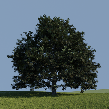 Day 9 - Oak Leaves
