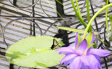 Kew Reflections