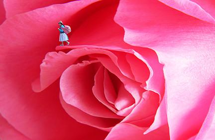 Peruvian Rose