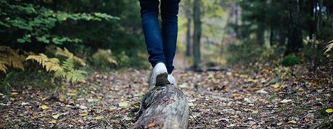 Wald7.jpg